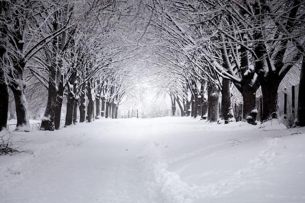 Buiten van mooie weg bij winterpark