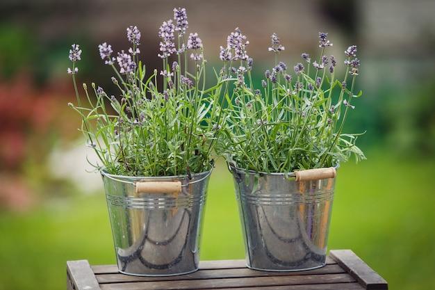Buitendecor met lavendelplanten in decoratieve metalen potten die op de houten kist staan.