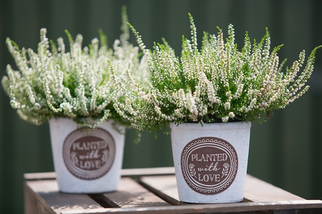 Buitendecoratie met heather-planten in sierpotten.