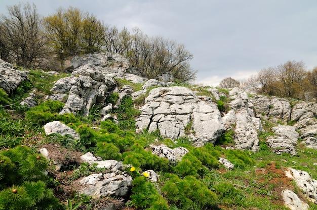 Buitenfoto, weide met groen gras bezaaid met grote stenen en keien, lucht met grijze wolken en bomen erin