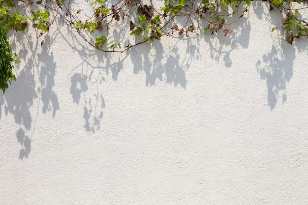 Buitenmuur met verschillende bladeren