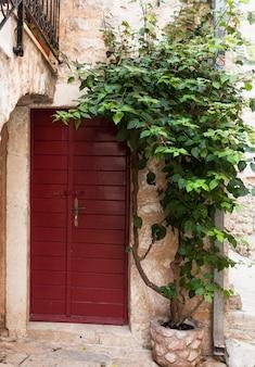Buitenschot van rode houten deur met groeiende groene klimop