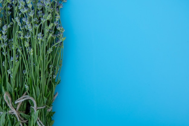 Bundel van lavendelbloemen die op blauwe achtergrond worden geïsoleerd