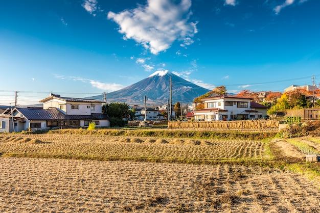 Bundels rijststelen hingen uit om te drogen