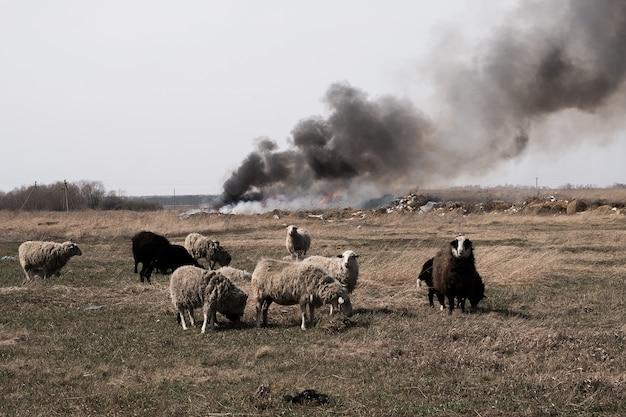 Burning garbage dump vervuilt het milieu. sterke wind veroorzaakt giftige rook van verbrandend afval in de lucht.