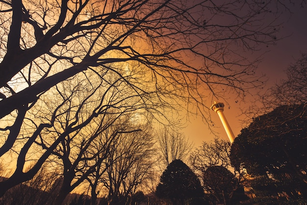 Busantoren met silhouet grote boom bij zonsondergang in busan, zuid-korea.