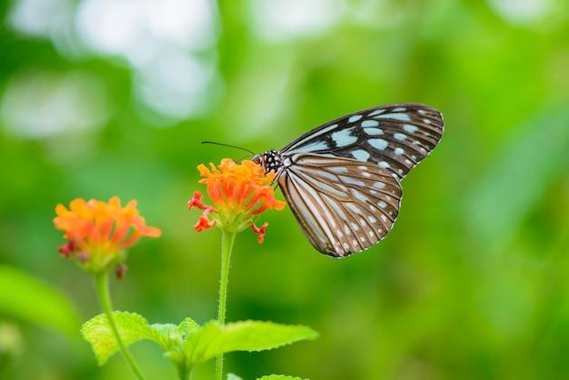 Butterfly zat op een bloem