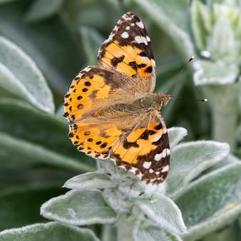 Butterflyinsect dier en ongewervelde