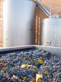 Cabernet sauvignon vinemaking met druiven en tanks