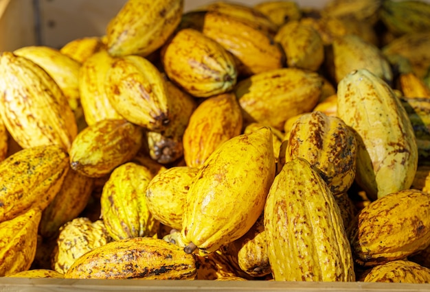 Cacaobonen en cacao pod op een houten oppervlak.