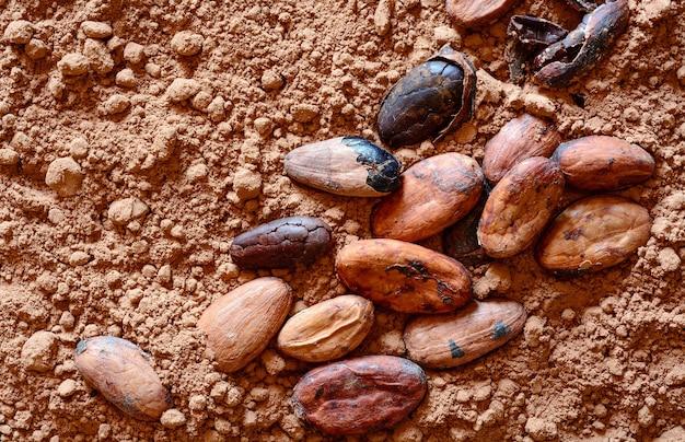 Cacaobonen op poeder