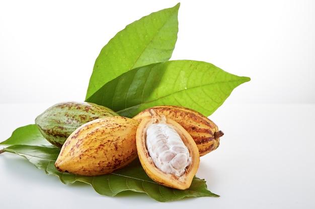 Cacaopeulen met cacaoblad op een wit