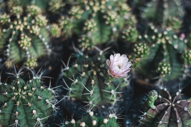 Cactus boom close-up