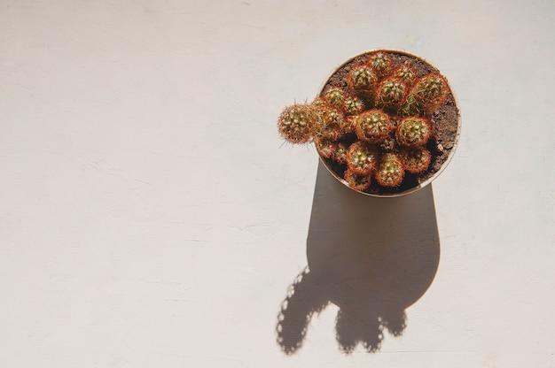 Cactus ceramisch in pot op een witte ruimte en een witte achtergrond.