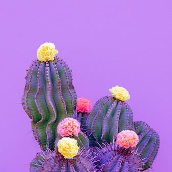 Cactus en rozen decor. minimaal mode-cactusliefhebberconcept