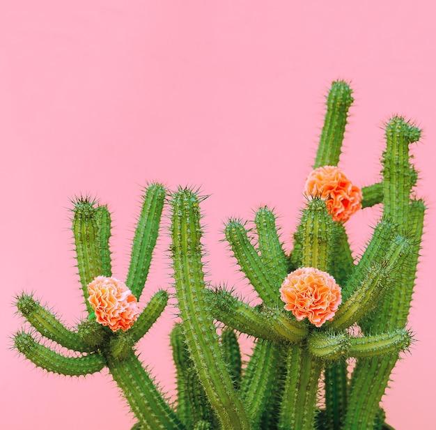 Cactus en rozen decor. planten op roze concept