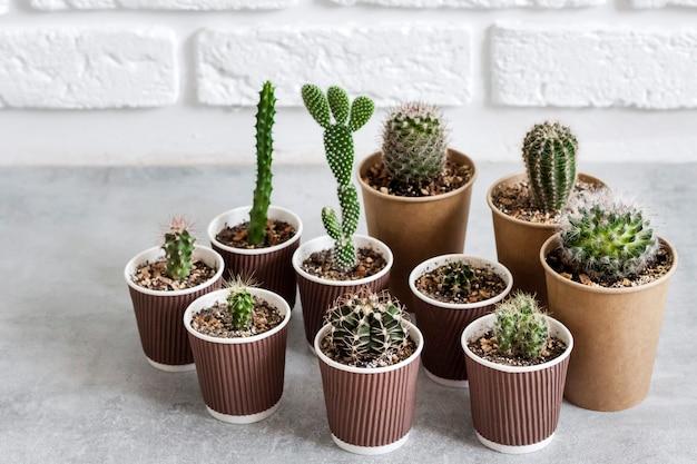 Cactus- en vetplantencollectie in papieren bekers