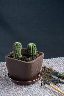 Cactus homeplant op tafel met tuingereedschap op grijze achtergrond
