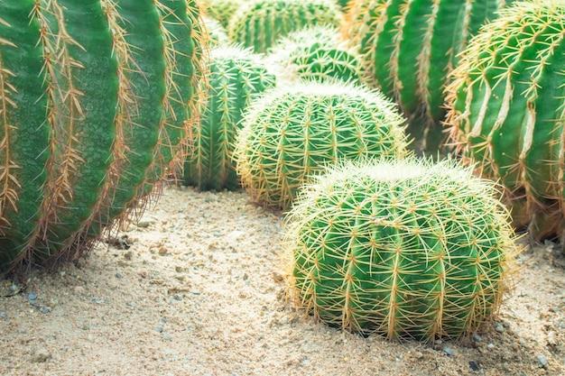 Cactus in de tuin. Premium Foto