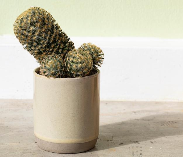 Cactus in een bruine keramische pot op cement tafel achtergrond.