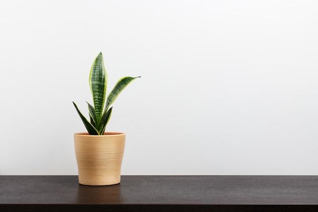 Cactus in een gele pot op donkere werkruimtetafel en witte muurachtergrond