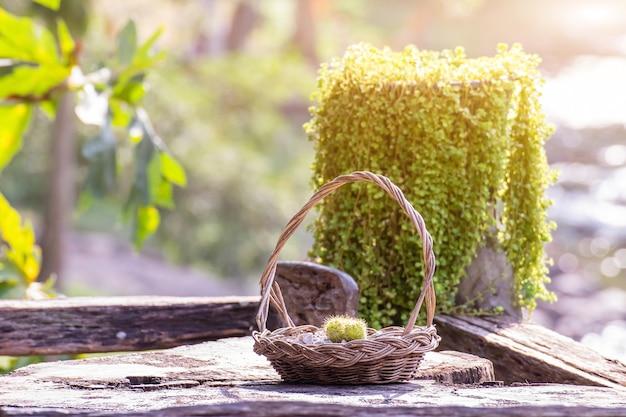 Cactus in een mand die ter decoratie op een stuk hout wordt geplaatst