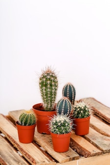 Cactus in een pot