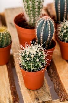 Cactus in een pot