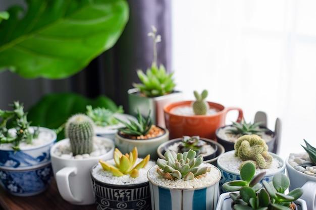 Cactus in een prachtig versierde pot op tafel.