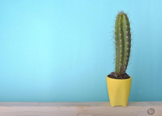 Cactus in gele pot op hout en blauw
