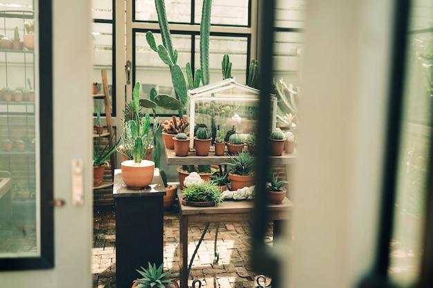 Cactus in glazen huis. tropische plant. tuinactiviteiten