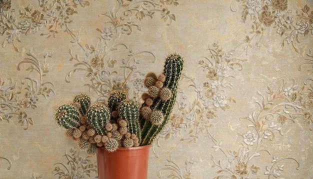 Cactus in pot in interieur huis. vrije ruimte voor tekst. 16 in 9 bijsnijden