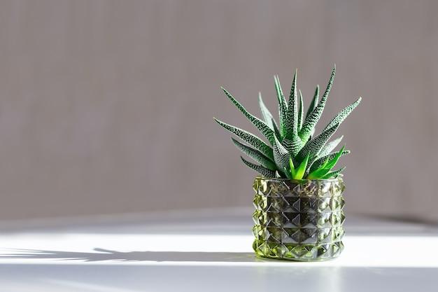 Cactus in pot met donkere schaduwen van zonlicht