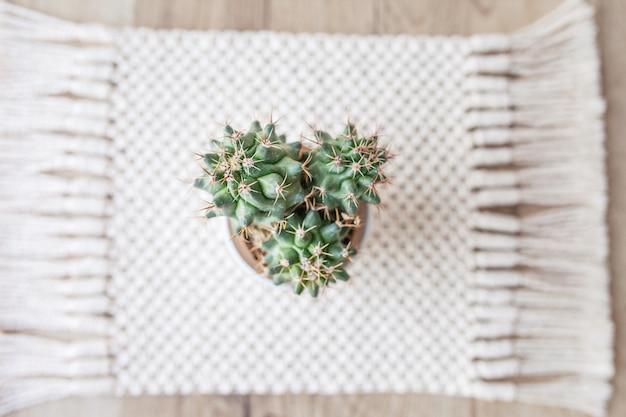Cactus in pot op natuurlijk katoenen touw mat tapijt op rustieke houten tafel. eco-stijl met groene plant. modern macrame handgemaakt. gebreid huisdecoratieconcept