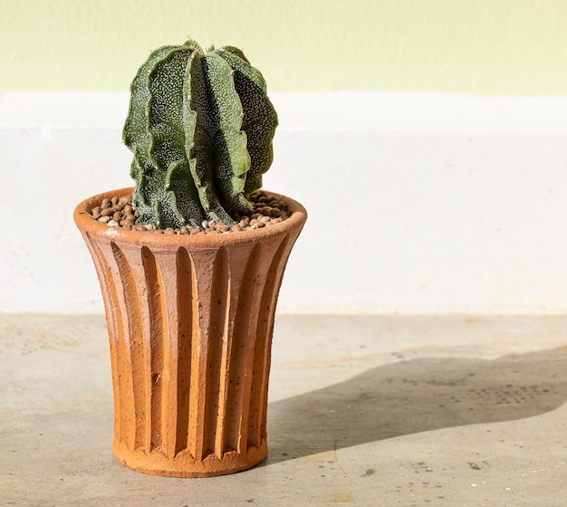 Cactus in terracotta pot op cement tafel achtergrond.