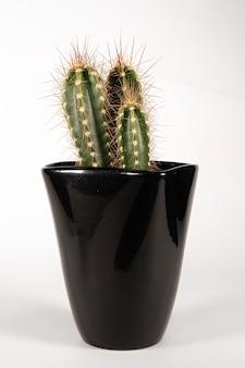 Cactus in zwarte keramische moderne pot bloempot geïsoleerd op een witte achtergrond