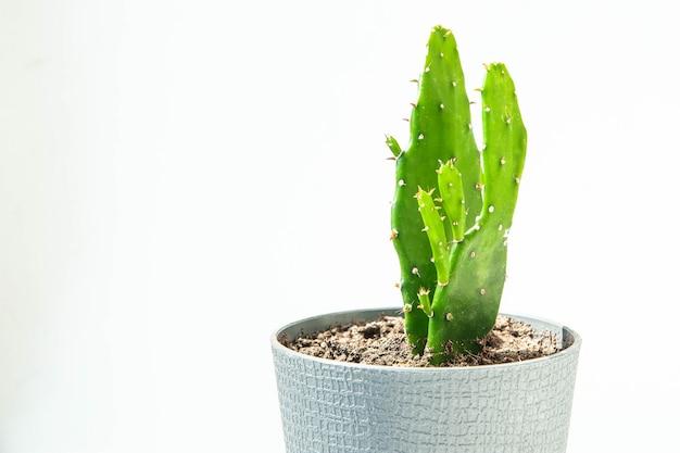 Cactus. kleine cactusstijl met retro filtereffect. groene stemming.