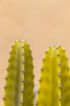 Cactus met scherpe doornen