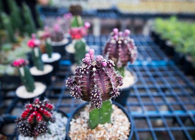 Cactus mooi in pot bij tuin.