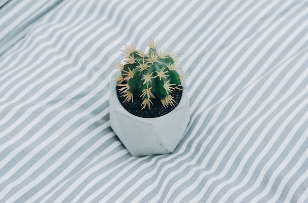 Cactus op deken op het bed thuis