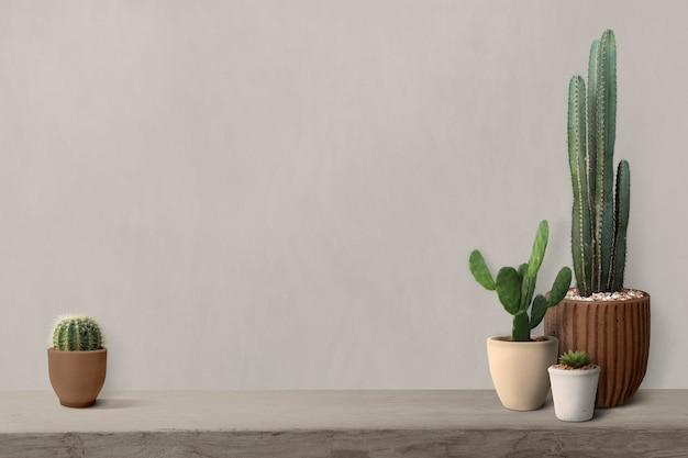 Cactus op een plank bij een blinde muurachtergrond