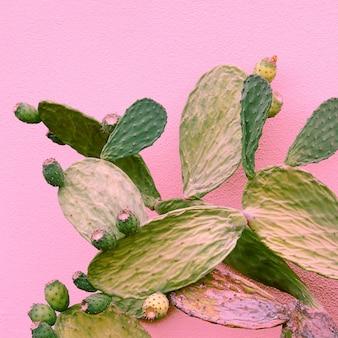 Cactus op roze achtergrond. planten op roze concept art. idee voor cactusliefhebbers