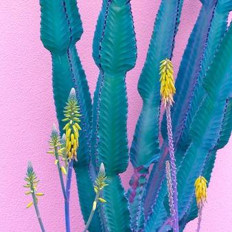 Cactus op roze muur. planten op roze kunst. cactus liefhebber concept