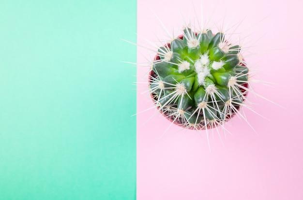 Cactus op roze