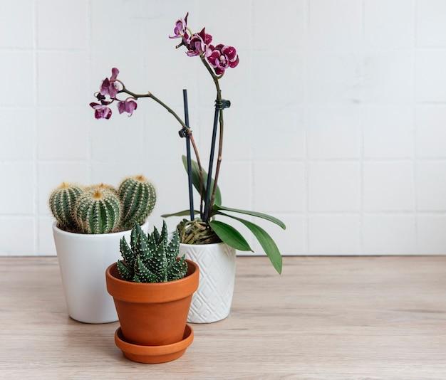 Cactus, orchideebloemen en vetplant in potten op tafel, kamerplanten