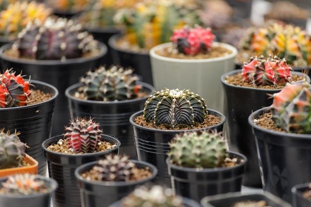 Cactus plant farm groeiende cactus plant in de tuin.
