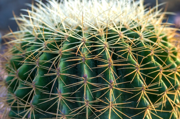 Cactus plant in het park