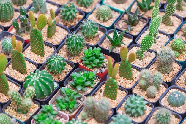 Cactus plant verlaat patroon. groene bladeren.