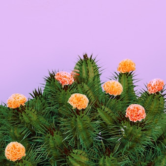 Cactus rozen decor. minimaal modecactus creatief concept
