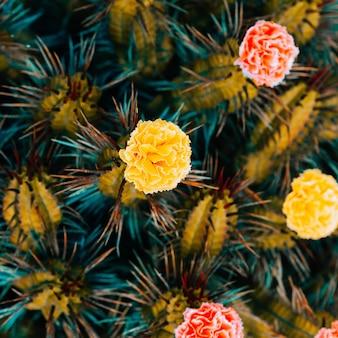 Cactus rozen decor. minimaal modecactus creatief ontwerp